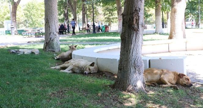 Kavurucu sıcak hayvanları da olumsuz etkiliyor