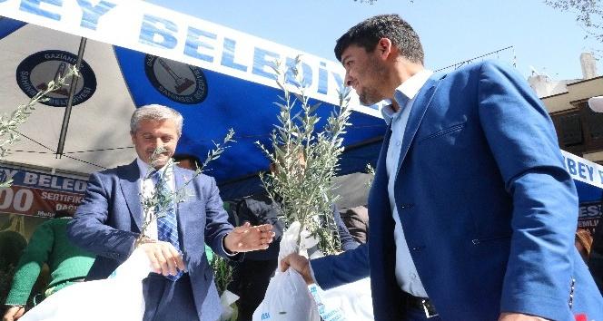 Gaziantep'te 600 bin Zeytin Fidanı dağıtıldı