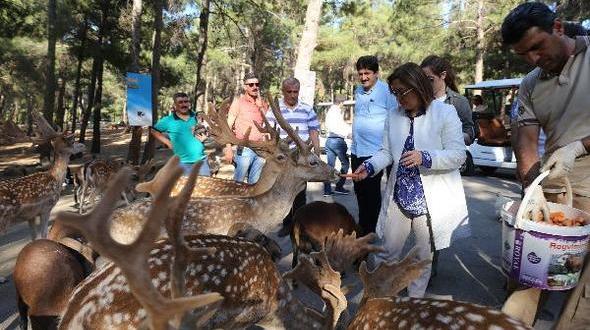 Hayvanat Bahçesi, Kadınlar ve Çocuklara Ücretsiz Olacak.