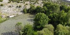 Burası Afrika Değil Gaziantep Gaziantep'te Nilüfer Çiçeklerinin Yaprakları Karapınar Göletini Yeşile Boyadı