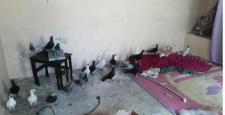 Gaziantep'te Güvercin Hırsızları Tutuklandı
