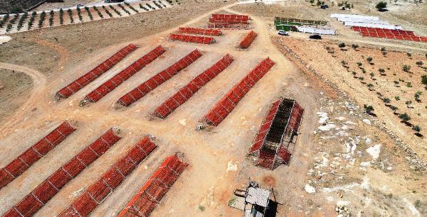 Gaziantep'te 'Kurutmalık' Sezonu Başladı