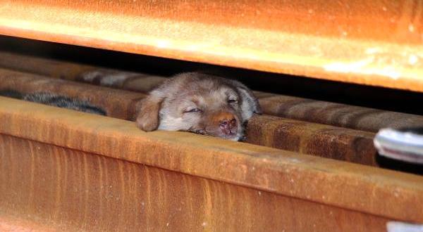 Rayların Arasına Sıkışan Yavru Köpekler, İş Makinesi ile Kurtarıldı