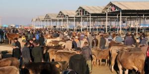 Gaziantep Hayvan Pazarları Kapatıldı